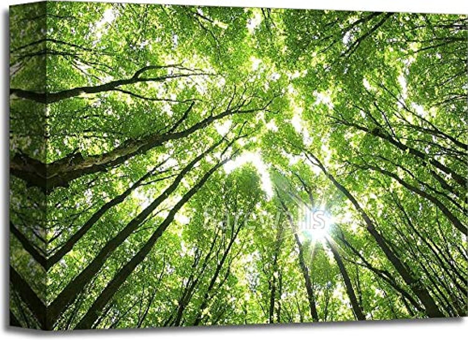 c46bcdd288d63 Green Trees Background Gallery Wrapped Canvas Art (11in. x 14in ...