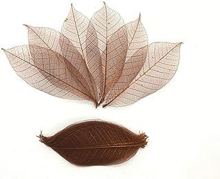100 Pcs Brown Color Large Leaves Skeleton Leaves Rubber Tree Natural Scrapbooking Craft DIY Card Wedding.
