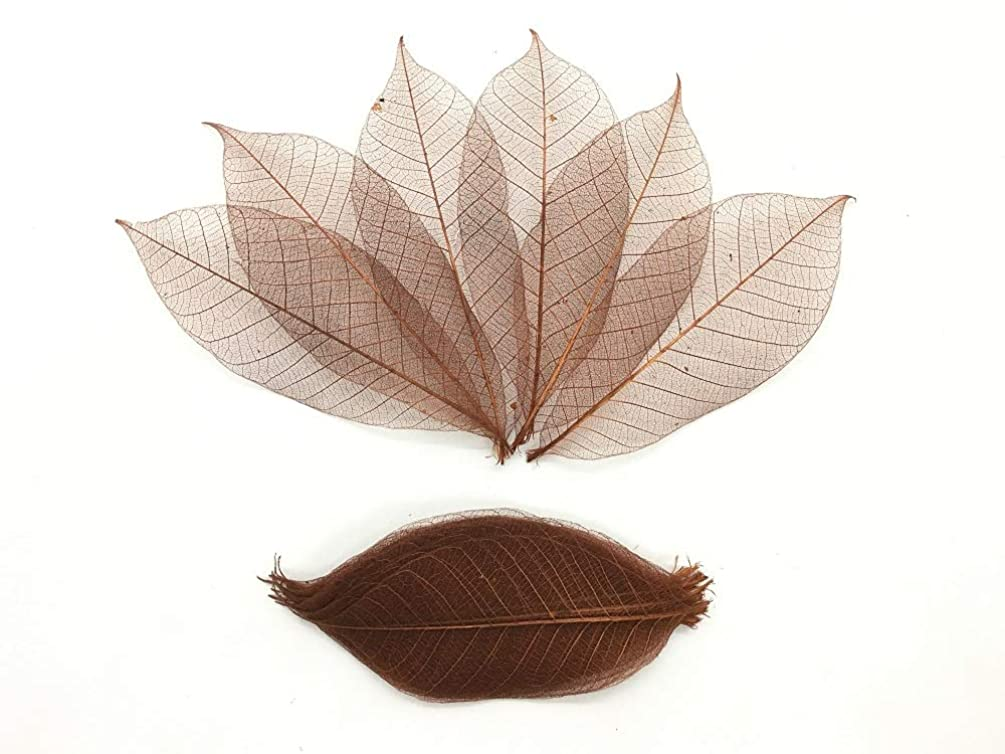 100 Brown Color Skeleton Leaves Rubber Tree Natural Scrapbooking Craft DIY Card Wedding, Mulberry Paper Leaves, by WADSUWAN SHOP
