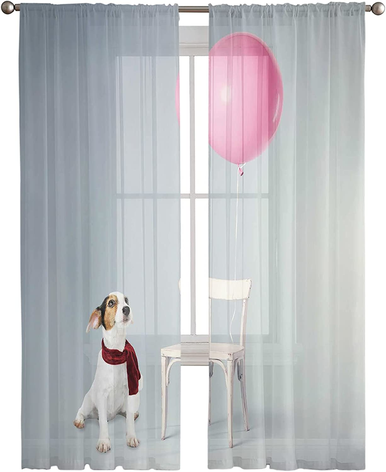 Zadaling Sheer Voile Curtains Outlet SALE Draperies-Funny The Dog Ranking TOP14 Sitting Fl