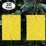 Best Fly Papers - Yellow Sticky Traps (20 Pack) - Gnat Trap Review