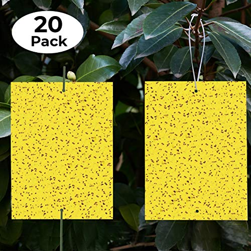 Yellow Sticky Traps (20 Pack) - Gnat Trap -...