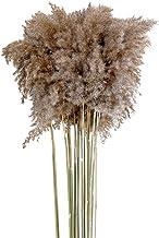 oshhni 10pcs Pampas Grama Artificial Hastes Secas Flores Secas Acessórios Decorativos para Casa Bouquet Floral Boho Decora...