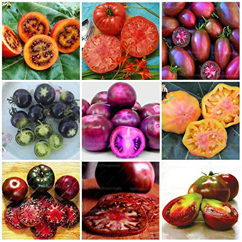 200pcs SVI pomodoro fresco semi di verdure per la semina mescolati