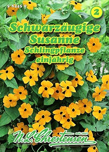 Thunbergia alata, Schwarzäugige Susanne gelb bis N.L.Chrestensen Samen