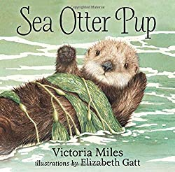 Sea Otter Pup Board book