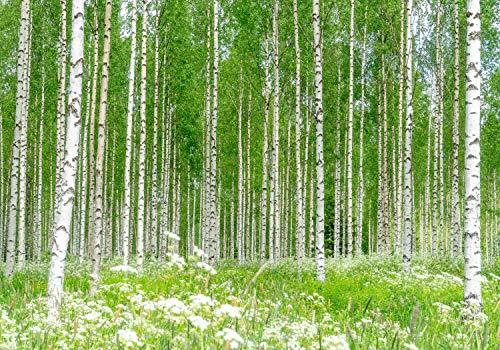 wandmotiv24 Fototapete Birkenwald Blumen Wiese XL 350 x 245 cm - 7 Teile Fototapeten, Wandbild, Motivtapeten, Vlies-Tapeten Gras Wald Birken Bäume M5840