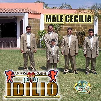 Male Cecilia