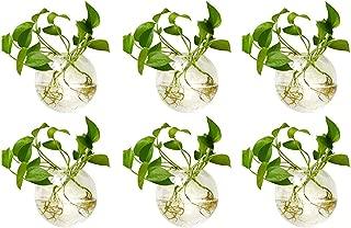 Nuptio 6 Pcs Wall Terrarium Hanging Glass Planters 4 Inches Diameter Round Glass Plant Pot - Water Planting Vases Air Flower Vase Plant Terrariums Plant Container (6 Pcs)