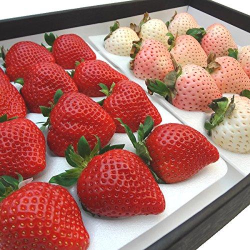 紅白いちご セット 福岡県産いちご あまおう 12粒入り 佐賀県産 白い苺 雪うさぎ 12粒入り