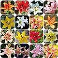 Afco 100Pcs Rare Lily Bulbs Seeds Home Garden Balcony Perfume Flower Bonsai Plant