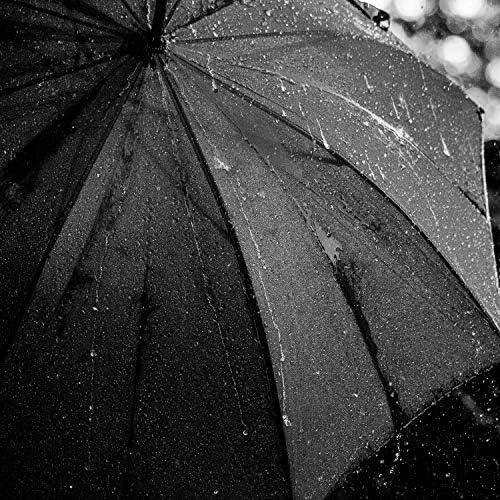 Oasis Rain & Lluvia Paradisio