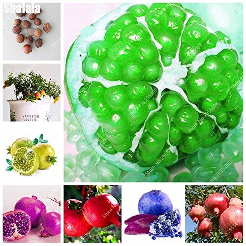 30pcs/sac Heirloom Seeds grenade vivace géant non-OGM bio Succulent Bonsai Jardin Arbre Plante en pot pour Flower Pot 1