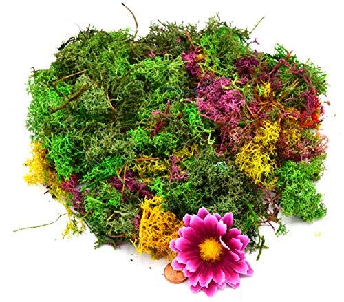 Muwse Island-moos W 50g buntes Märchen-Wald Sortiment Hand-gerupft, präpariert, gefärbt, weich, leicht, lichtecht, haltbar. Deko-moos Floristik-moos Bastel-moos Dekomaterial Zubehör