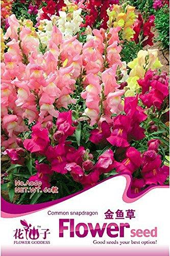 Topfrose rosa Französisch Ringelblume...