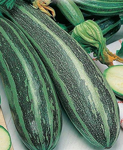 Franchi Graines d/'Italie-Courgette-Genovese-Graines