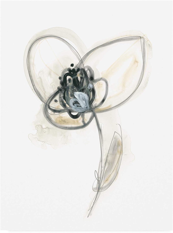 Trademark Fine Art Monochrome Floral Study VII by June Erica Vess, 14x19