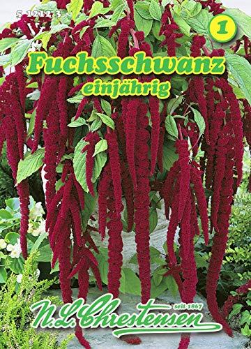 Amaranthus caudatus, Fuchsschwanz rotblättrig N.L.Chrestensen Samen 512123-B