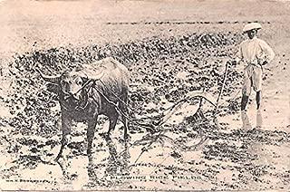 plowing rice field
