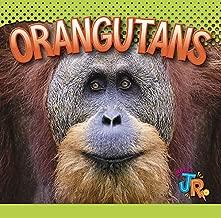 Orangutans (Awesome Animal Lives)