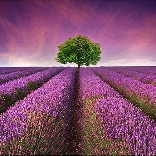 300pcs Lavendel Samen Garten Hause...