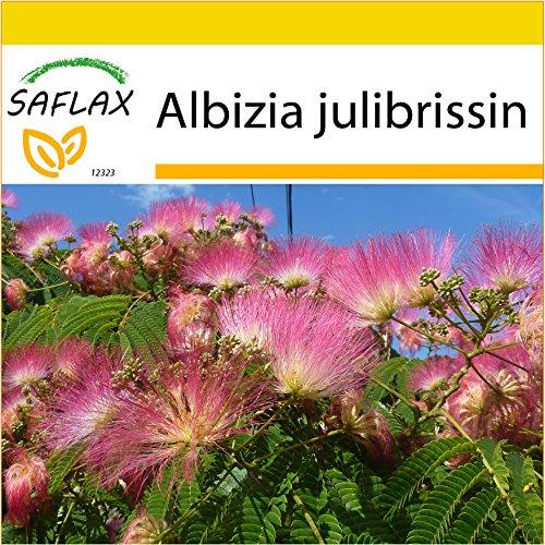 SAFLAX - Kit de culture - Albizia - 50 graines - Albizia julibrissin