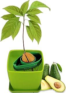 AvoSeedo Kit Jardineriapara Aguacate - Gadget Decoracion Casa con Maceta Y Decoracion Habitacion/Uso Interior o Exterior/ Regalos Originales para Mujer e Ideas Regalos para Hombre En Navidad