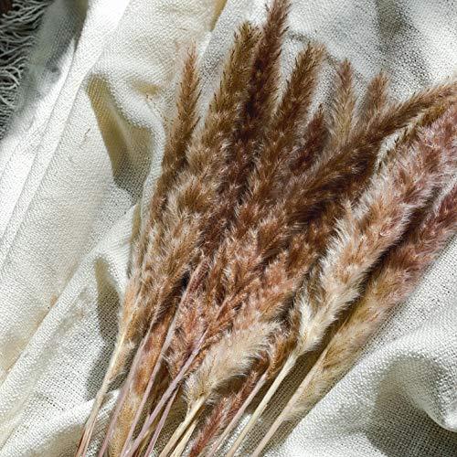 AMAE | Pampasgras getrocknet | Trockenblumen Blumenstrauß Natur | Pampas Deko für Inneneinrichtungen | Fotografie & Hochzeit | Natur