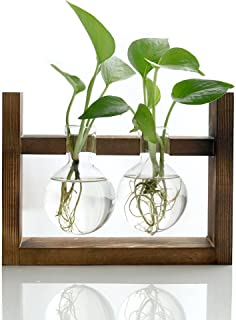 Ivolador Desktop Glass Planter Bulb Vase with Retro Solid Wooden Stand for Hydroponics Plants Home Garden Wedding Decor (2 Bulb Vase)
