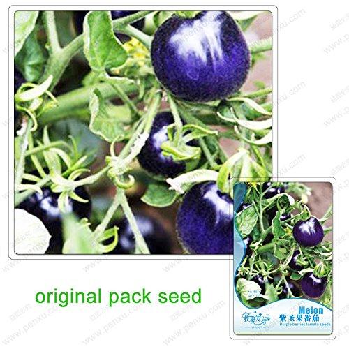 25 graines/Pack, tomate fruit sacré pourpre, graines de tomates pourpres, fruits et légumes biologiques, les plantes en pot