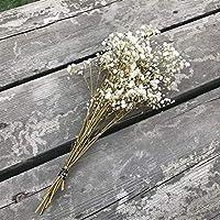 SJZS Artificial y Flores secadas 15-25 cm Fresca Natural Seca conservada Flores, Real Siempre la respiración del bebé Flower Branch for DIY Eterna Flor Material (Color : 07)