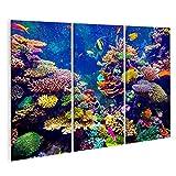 Bild auf Leinwand Korallenriff und tropische Fische im