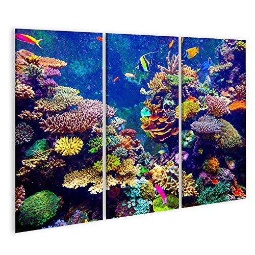 Bild auf Leinwand Korallenriff und tropische Fische im Sonnenlicht Singapur-Aquarium Bilder Wandbild Poster Leinwandbild GBVB