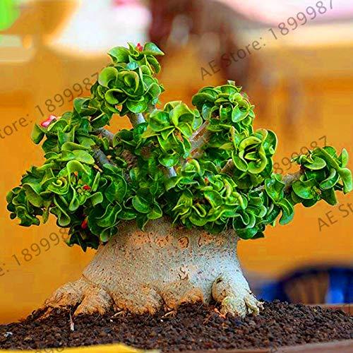 Pinkdose ¡Venta!1 unids raras plantas del desierto rosa real Tailandia Adenium Obesum jardín flor bonsai planta mini árbol gigante flor envío gratis