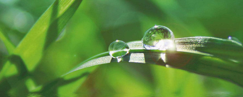 Artland Qualitätsbilder   Glasbilder Deko Glas Bilder 125 x x x 50 cm Gras Tropfen Wellness Spa D1JG B07JFQQ5N2 b70f63