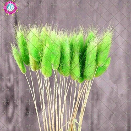 100 Pcs graminée Graines, Graines de fétuque colorés Bonsai Graminées Graines de jardin Plantes 1 pot