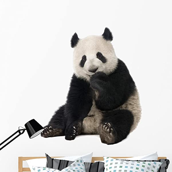 Wallmonkeys Giant Panda Wall Decal Peel And Stick Animal Graphics 48 In W X 47 In H WM328620