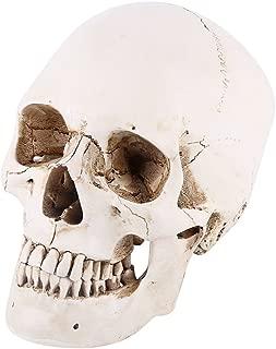 Walfront 1:1 Life Size Model Resin Human Anatomy Head Skull Replica Teaching Tool Halloween Decor White