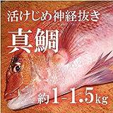 活けじめ 真鯛 養殖 愛媛産 約1-1.5kg 【築地直送】マダイ