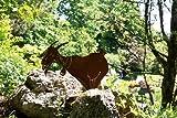 Edelrost Ziege mit Glocke auf Platte Dekoration
