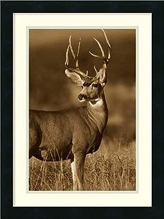Framed Wall Art Print Mule Deer Male in Dry Grass North America Sepia by Tim Fitzharris 18.00 x 24.00