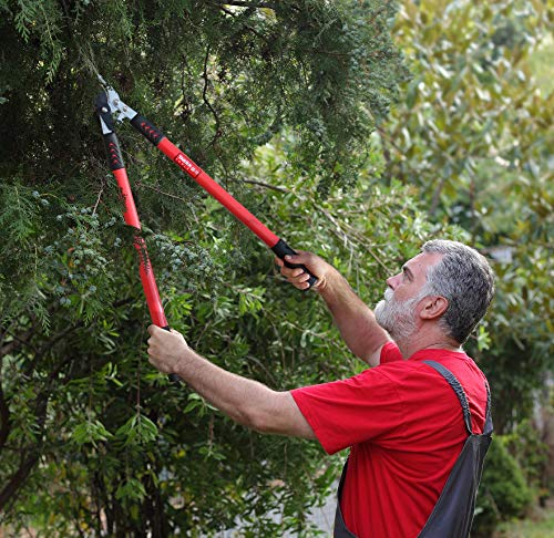 TABOR TOOLS GG12A Anvil Lopper with Compound Action, Chops Thick Branches with Ease, 30 Inch Tree Trimmer, Branch Cutter with 2 Inch Clean Cut Capacity.