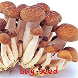 Seeds:100 Pcs/Bag Mushroom Plants Garden Mini Succlent Plants Plants 2017 New Edible and Health Vegetable For Happy Farm White