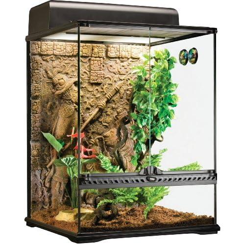 Tarantula Terrarium Amazon Com