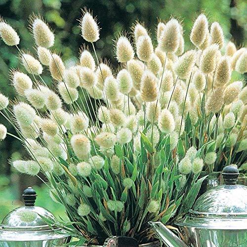 GEOPONICS Beau lapin 80 graines Acheter 4 article