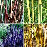 XQxiqi689sy 300 unids/bolsa bambú sombra tolerante decoración casera verde raro alta germinación jardín semillas semillas de bambú