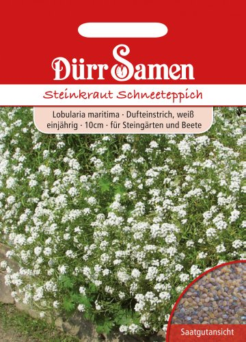 Dürr-Samen Steinkraut Schneeteppich