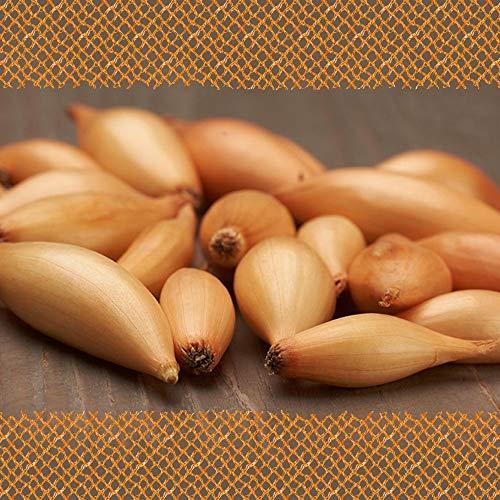 FLORTUS 2000-0420-250g Steckzwiebeln Birnförmige 250 g I Zwiebeln in hoher Qualität pflanzen I Gemüsezwiebel I Steckzwiebelgröße 14 - 21 mm