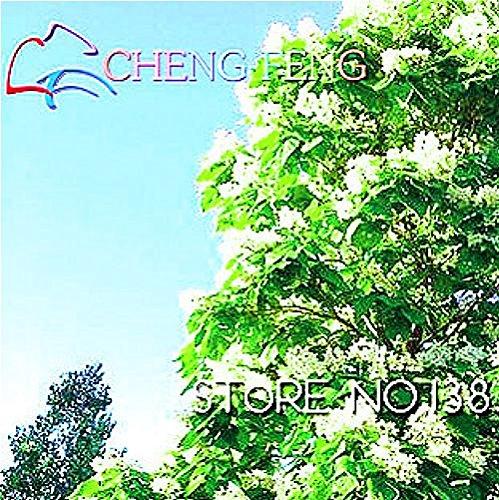 Big Promotion! Blanc Eustoma Graines Plantes vivaces à fleurs Balcon pot Fleurs Graines Lisianthus, 100 semences / Pack, # M6Y011
