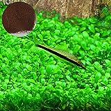 Luffy Aquarium Temple Plant Seeds, 2 Ounce, Vibrant Green Tropical Hygrophila Plant